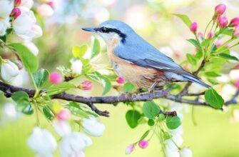цілющі властивості пташиного співу